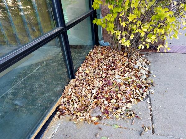 dead-leaves
